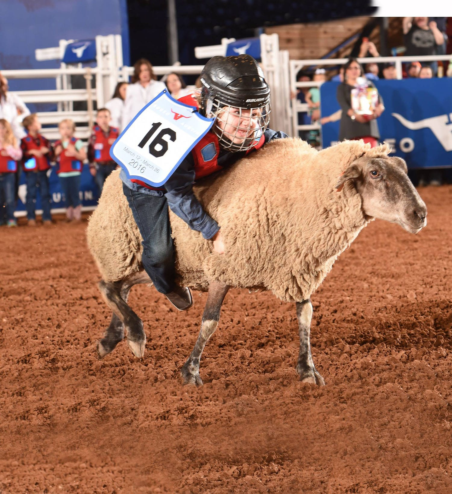 mutton bustin contestant riding sheep