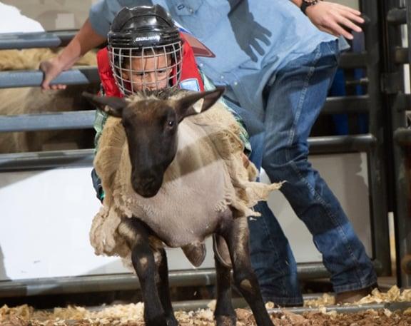 Rodeo Austin mutton bustin kid riding sheep