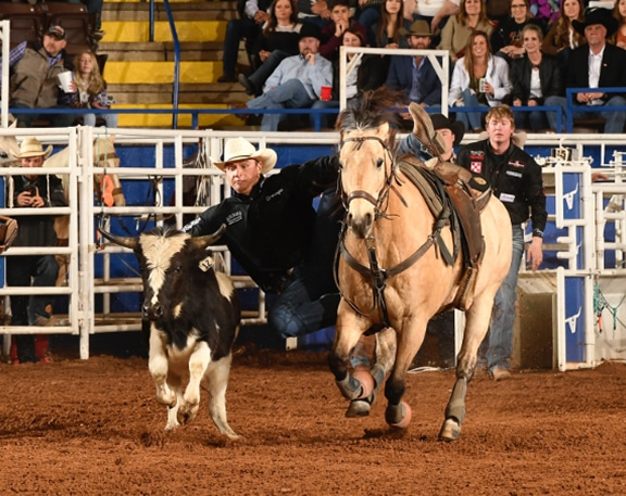 man jumping off horse to wrestle steer in arena